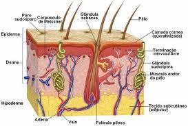 corte pele